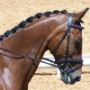Большая роль для маленькой лошадки