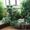 Как подкормить комнатные растения